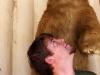 bear-attack-r1